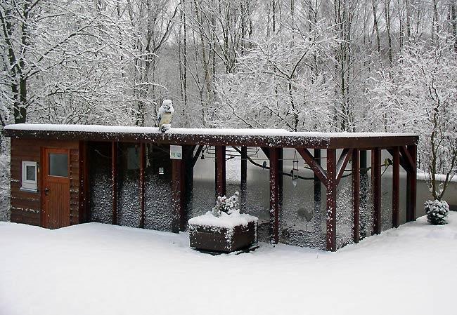 Gartenmobel Auflagen Rattan : Wellensittiche im Winter bei Schnee in der Außenvoliere
